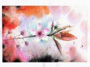 bloom-peach